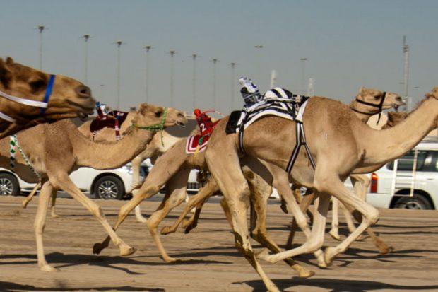 Permalink to: Áo da lạc đà – những điều cần biết